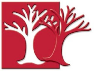 Bare Tree - Medium